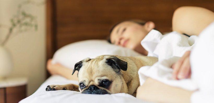 60c7095ffb81 Μη νιώθεις ενοχές αν σου αρέσει να κοιμάσαι αγκαλιά με το σκύλο σου. Ο  ύπνος με το σκύλο μας είναι μια από τις μεγαλύτερες απολαύσεις